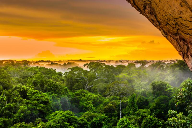 The-10-largest-rainforests-in-the-world.jpg