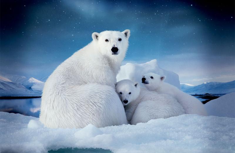 arktika.jpg